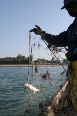 La cooperativa dei pescatori